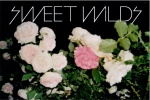 SWEET WILDS2